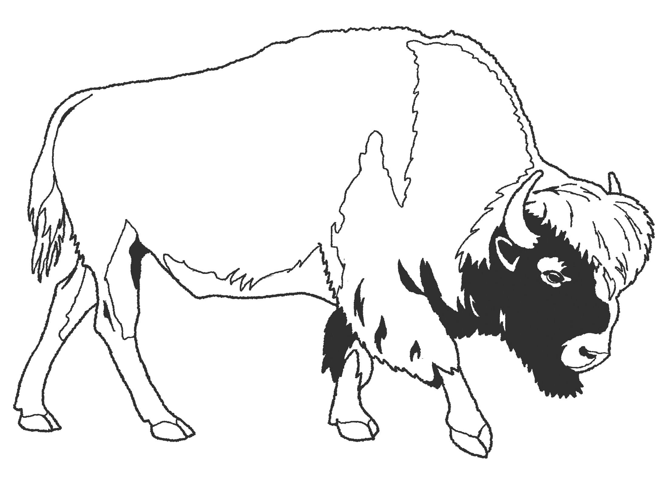Рисунок зубра из красной книги