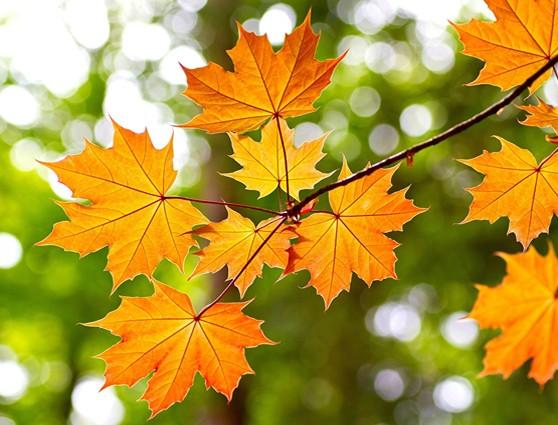 Послание Осени. Сюрпризный момент на празднике в средней группе