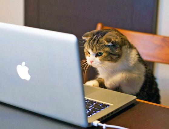 Сказка про умного кота, мышек-воришек и компьютер