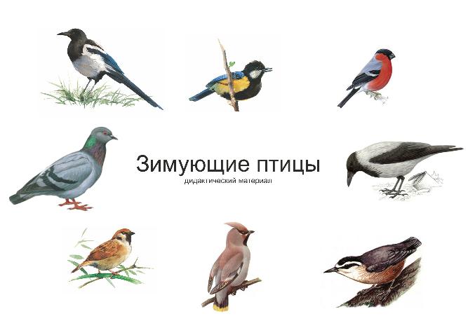 всех птиц с названиями