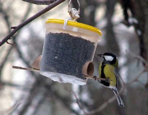 Проект «Зимующие птицы»