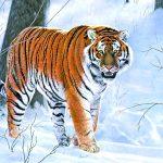 Раскраска_ Тигр_1