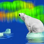 Раскраска_Белый_медведь_Page_1